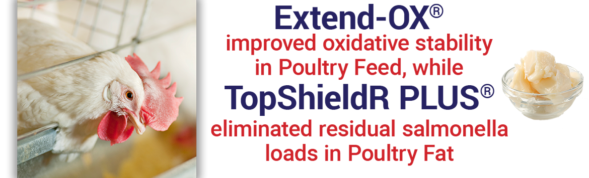 Top ShieldR Plus eliminated residual salmonella loads in poultry fat.